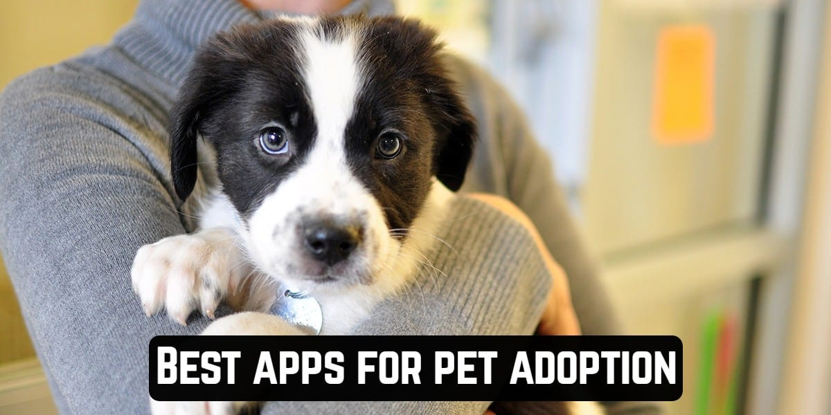Best apps for pet adoption