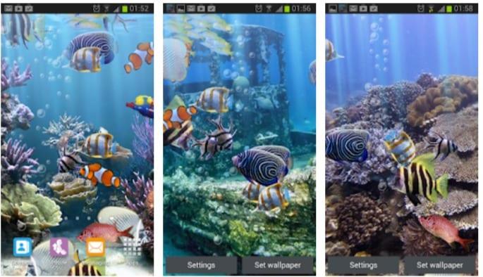 The real aquarium